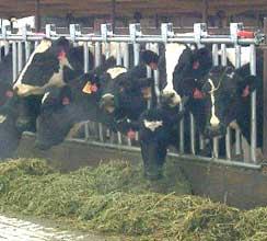 hydromentia-livestock-feed